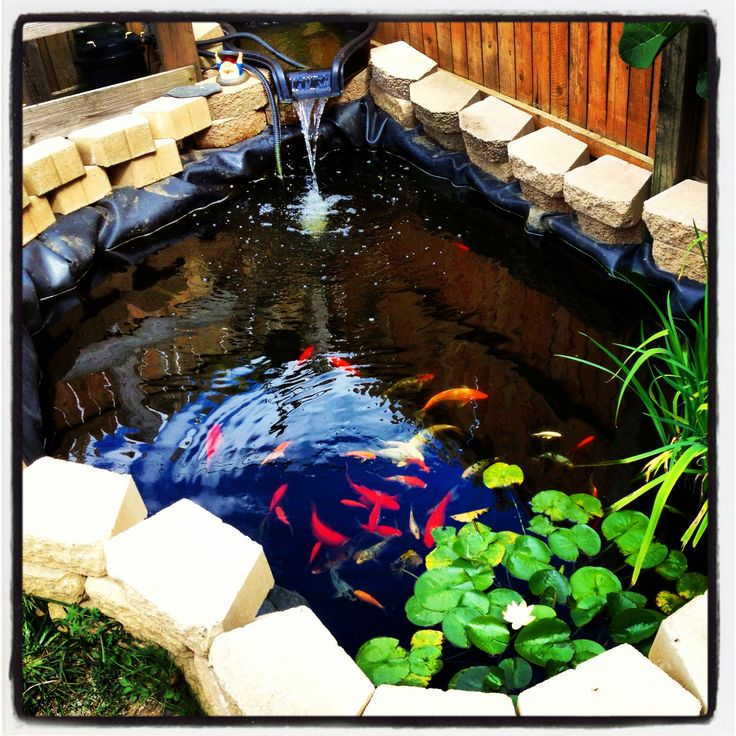 17 best images about koi ponds on pinterest the pond for Blue koi pond liner