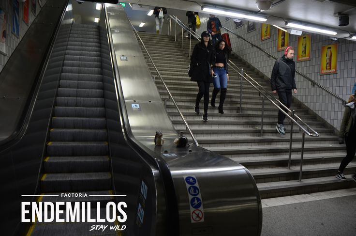 # Endemillos en la Central Station de Estocolm