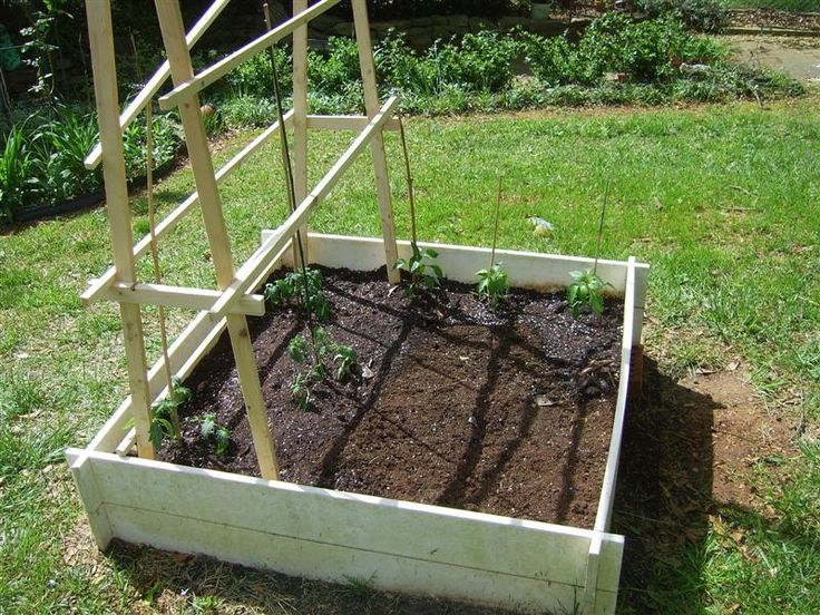 Tomato trellis on raised bed Tomato trellis, Plants, Garden