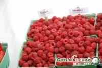 Мейкер  Экономическое значение высокое, из-за крупной ягоды предназначенной для механизированной уборки. Сорт в настоящее время занимает более половины плантаций в США( штат Вашингтон) и Канаде ( Британская Колумбия). Именно этот сорт способствовал выход этих регионов на первое место в мире по объемам выращивания малины. Универсальный сорт, применимый для продажи в свежем виде, поштучного быстрого замораживания, для изготовления соков и пюре. Куст хорошо растет, выгоняет длинные побеги…