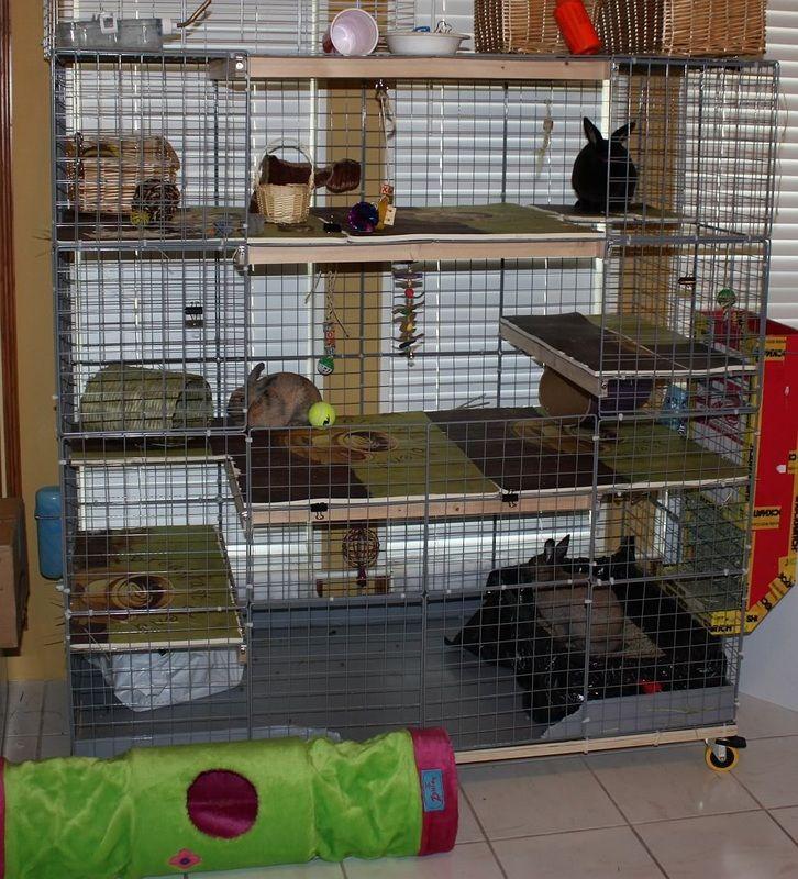 House And Play Area Ideas North Texas Rabbit Sanctuary