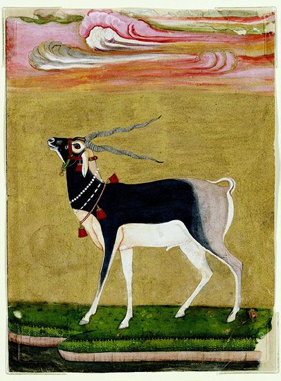A Black Buck adorned with necklaces and red bells. Northern India. ca. 1650