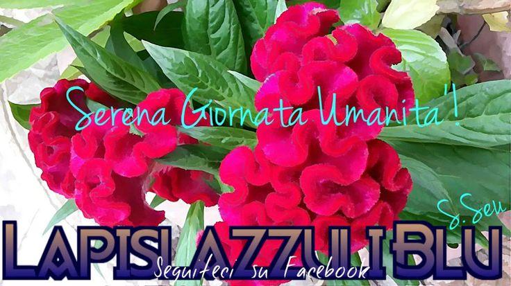Lapislazzuli Blu: #Serena #Giornata #Umanità!
