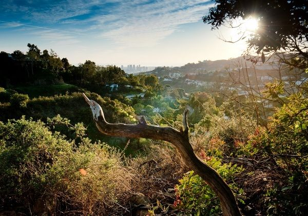 LA's outdoor fitness headquarters. 						 Noteworthy for: Hollywood Hills' famous residents regularly visit the park to let their mutts frolic in the off-leash area.