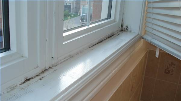 How to Remove Black Mold From Windows