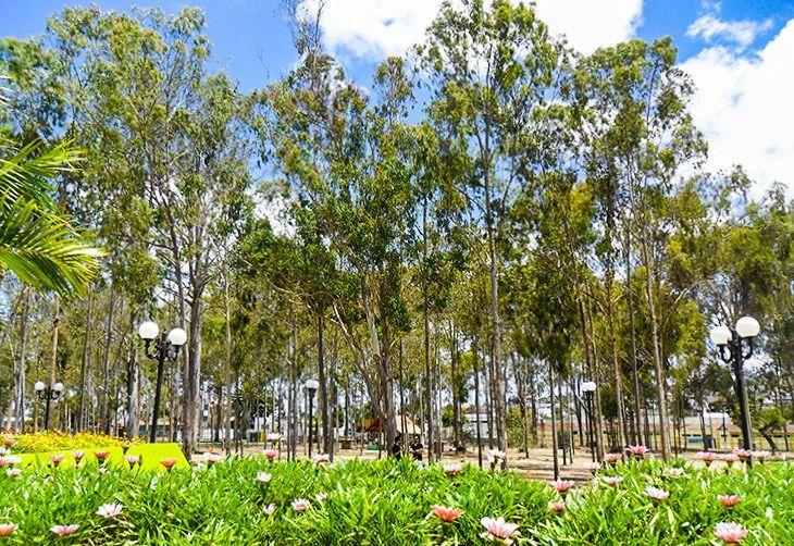 Um parque de eucaliptos e histórias