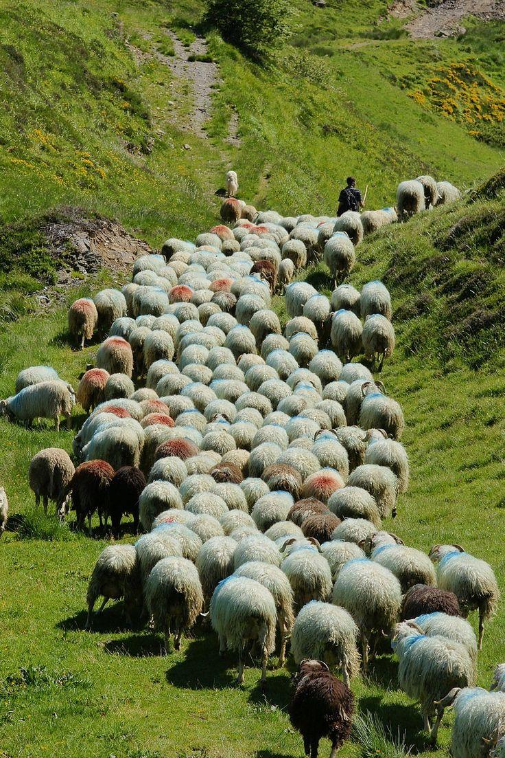 Pyrénées : une vie de berger en vallée d'Ossau | Randonnées | Échos des Pyrénées | Aquitaine OnLine