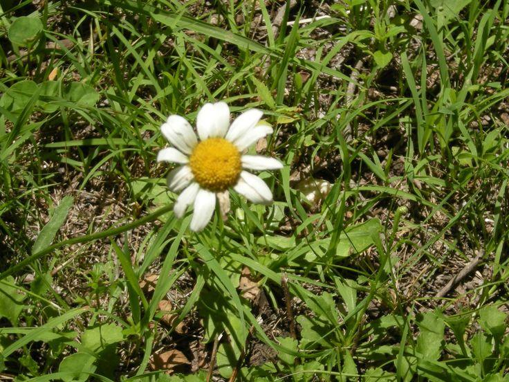 Flores sin Primavera ni estación