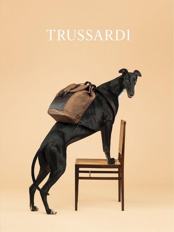 Итальянский модный дом Trussardi заручился поддержкой американского фотографа Уильяма Уэгмана для нетрадиционной съемки, в которой место привычных моделей заняли охотничьи собаки. Фотосессия, в которой английских борзых облачили в #куртки из кожи питона и прочие элементы гардероба и #аксессуары из коллекции Весна/Лето 2014, призвана напомнить о 40-летнем юбилее логотипа итальянского модного дома #ZeepShop