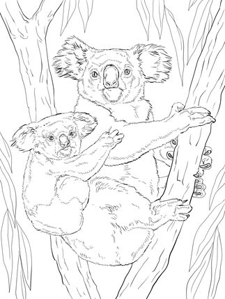 Click To See Printable Version Of Koala With Baby Coloring Page