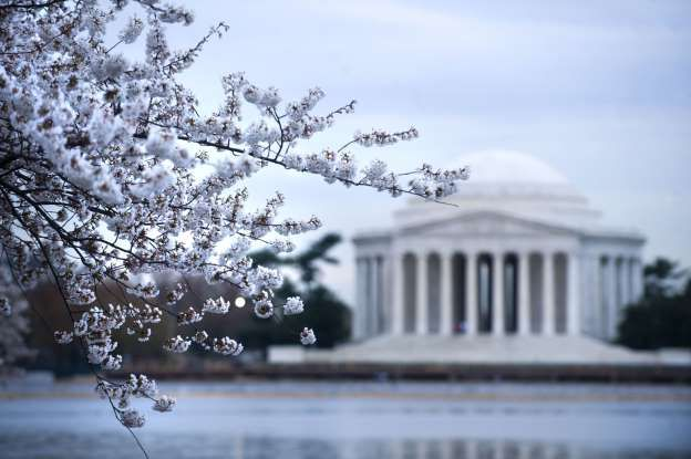 Usa Cherry Blossoms Dc - Mar 2011 The Jefferson Monument is Seen Through Cherry Blossom Trees Donated From Japan Nearly 100 Years Ago That Have Reached Full Bloom at the Tidal Basin in Washington Dc Usa 30 March 2011 Japan's National Tourism Board Pulled out of This Year's Cherry Blossom Festivities in D C Due to the Ongoing Catastrophes in Japan United States Washington