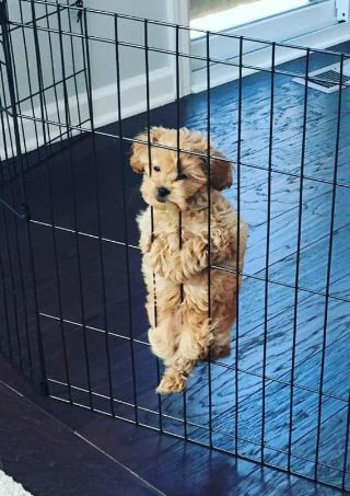 And this escape artist who needs to work on his escape artistry. | 18 Puppies Who Really Need Someone To Help Them