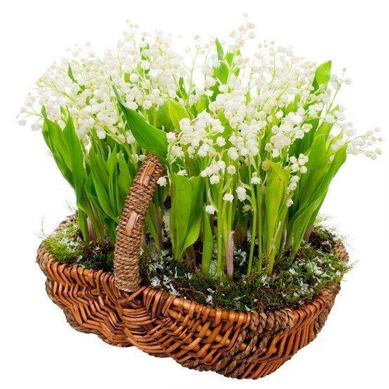 """Так ли важны истоки праздников?  Почему свидетели исследуют их корни и происхождение? Пример: Принёс муж жене красивые цветы. Она радуется им и спрашивает: """"Откуда они?"""" Муж отвечает: """"Зашёл на кладбище и там нарвал"""". Будет ли его жена дальше радоваться этим цветам, узнав где их корни, какое их происхождение?"""
