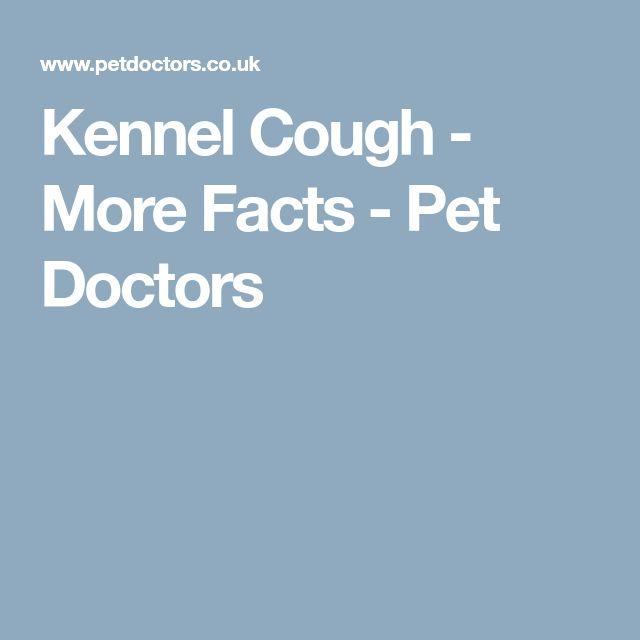 Kennel Cough - More Facts - Pet Doctors