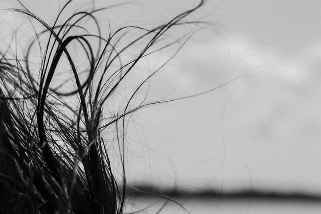 """""""La donna è mobile, qual capello al vento...."""" [sic]"""