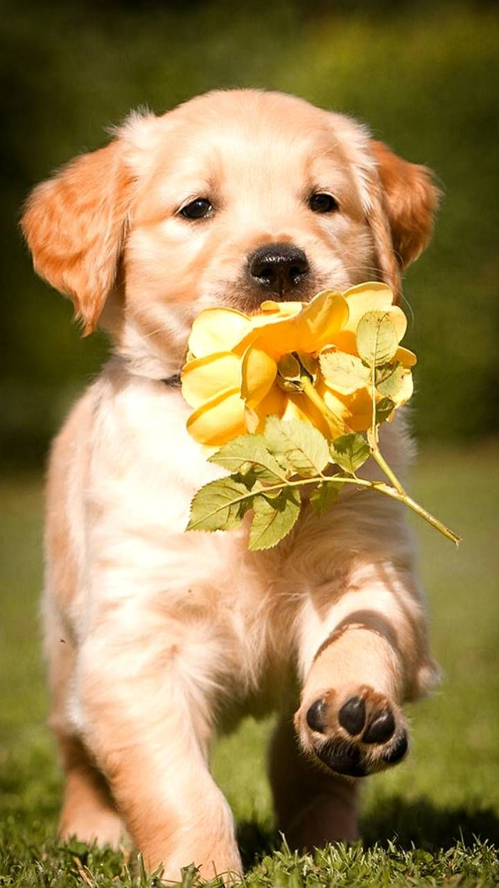 Download Puppy Wallpaper By Lovely Nature 27 B5 Free On Zedge Now Browse Millions Of Popular Anim Puppy Wallpaper Cute Puppy Wallpaper Cute Dog Wallpaper