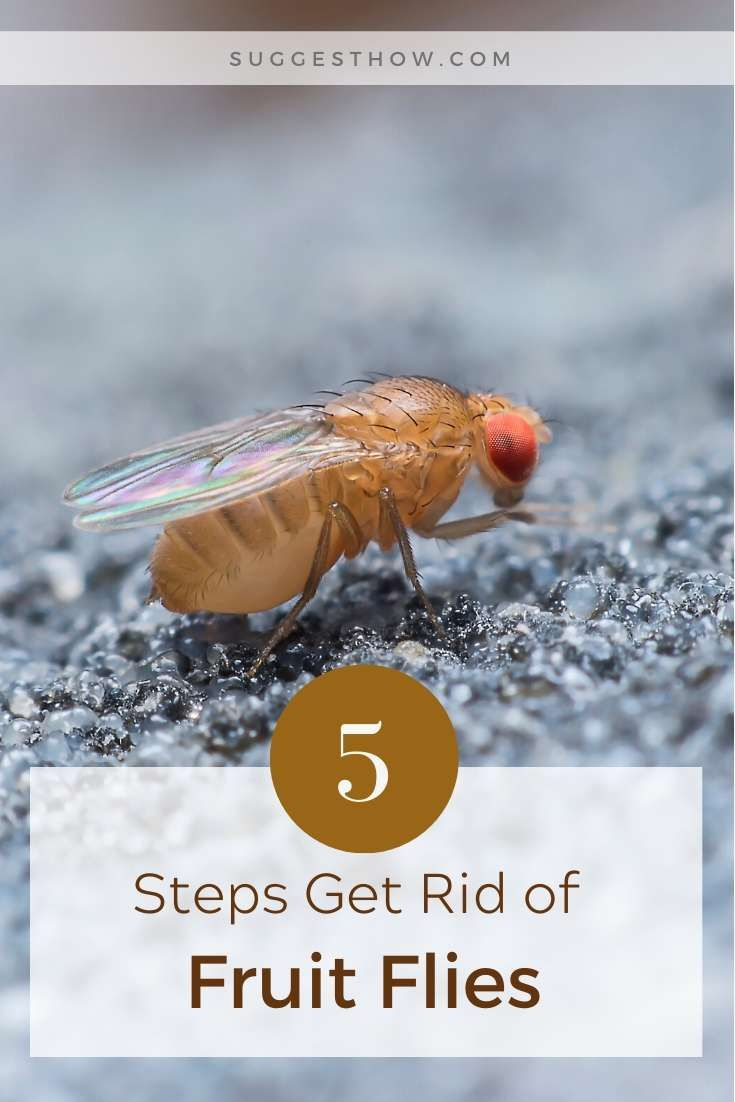 How To Get Rid Of Fruit Flies In Dishwasher