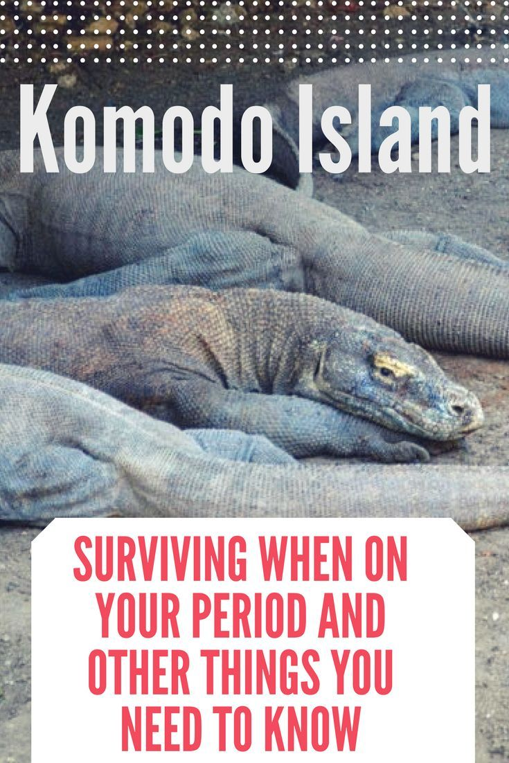 Komodo Island and its famous dragons. Why you shouldn't be worries when you are on your period and other things you need to know when you plan a visit to see the Komodo dragons. #indonesia #komodonationalpark #nationalpark #wildlife #adventuretravel