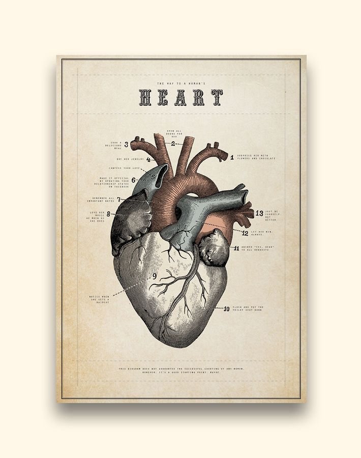 Anatomical Heart - earthbound trading company