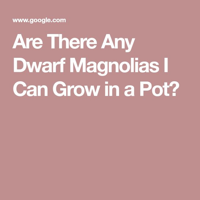Are There Any Dwarf Magnolias I Can Grow in a Pot?