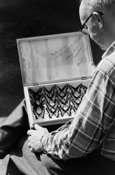 Vladimir Nabokov and collection of butterflies, Ithaca, N.Y., 1958.