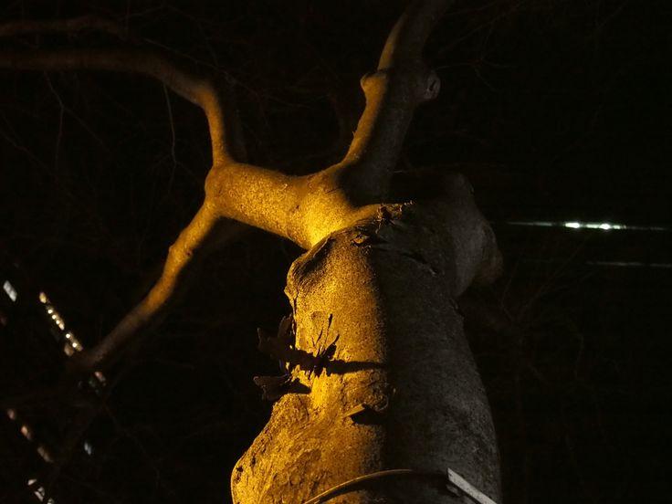 木を20時撮影。