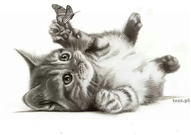 """""""Cat and Butterfly"""" pencil drawing 
