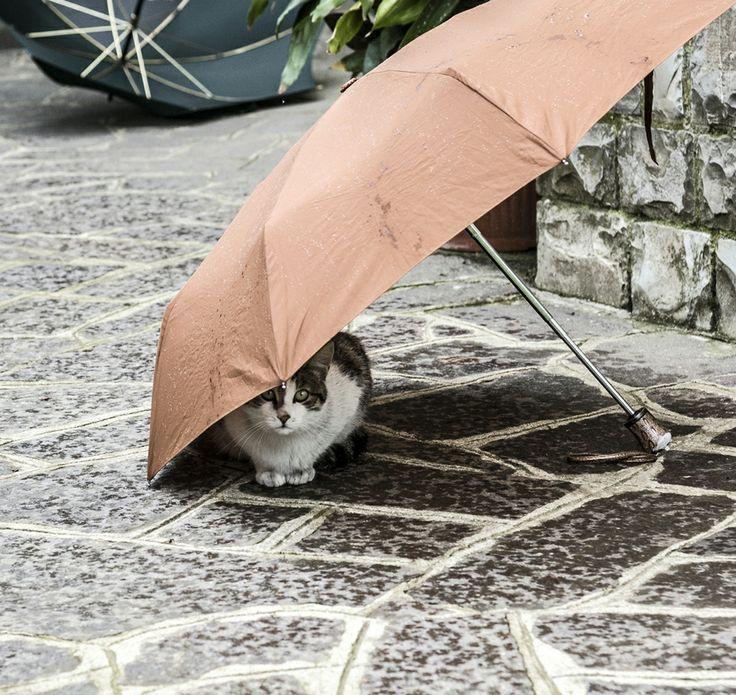...hai hai comincia a piovere...!!!