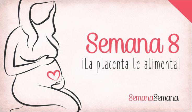 semana a semanaSemana 8 de embarazoembarazoprimer trimestre de embarazosegundo mes de embarazosíntomas de embarazoestas embarazadadesarrollo bebéconsejos embarazomenstruaciónmes a mes del embarazoel embarazo semana a semanaetapas del embarazoQuinta semana de gestacióncambios en el cuerpoembarazadaSíntomas semana 8 de embarazoSemana 6 de gestaciónTest de embarazoprueba embarazoprueba embarazo caseraginecólogoecografíaprimera ecografía