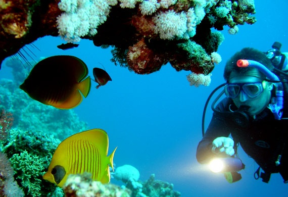 Snorkeling and scuba diving in Hawaii!