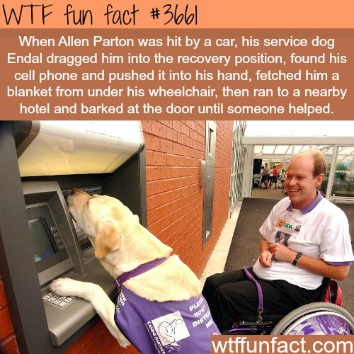 Allen Parton's and his dog who helped save his life - WTF fun facts