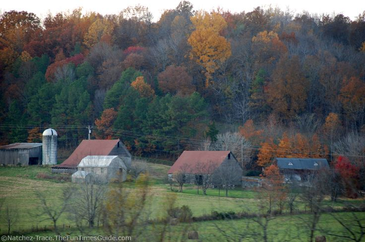 Fall Colors At The Judd's Family Farm …As Seen From The Natchez Trace Parkway #nashville