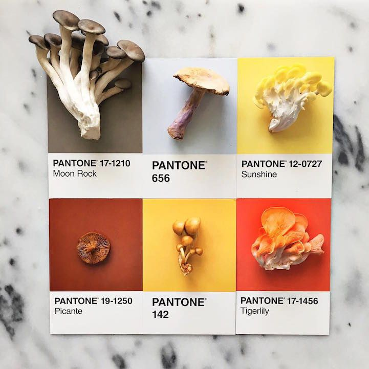 Designer Lucy Litman celebrates the beautiful colors found in the world by matching food items with their Pantone swatches.