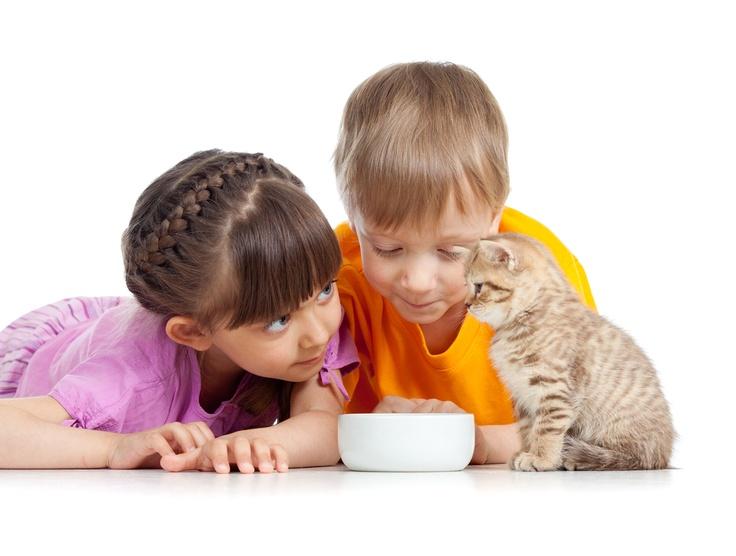 Astazi copiii mi-au pus o intrebare interesanta: ce mananca pisicutele pentru a fi asa de dragalase?  E simplu! PURINA One Junior, pentru ca are un nivel ridicat de proteine pentru oase puternice si formula Actilea pentru o crestere sanatoasa.