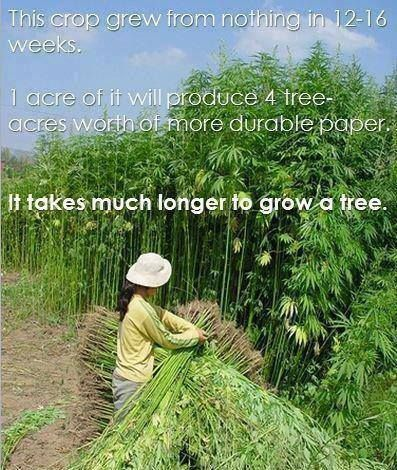 Hemp... what was old is new again.