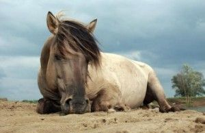 Tarpans, extinct prehistoric wild horses, a breed that disappeared from the wild in Europe two centuries ago, is reintroduced in southeast Bulgaria.