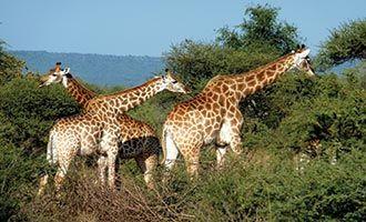 9. Madikwe Safari Lodge. Holidays with Kids Top 10 Family Resorts South Africa