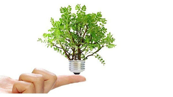 Día del ahorro de energía | Green Vivant