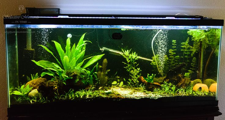My 55 Gallon Freshwater Natural Planted Tank. This is just prior to adding RCS (Red Cherry Shrimp). There is a brownish tinge from Indian Almond Leaves and Kordon ICH Attack.