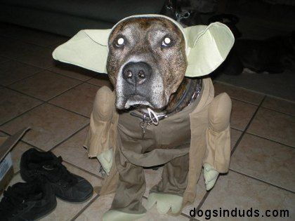 yoda dog costume star wars yoda quotes pit bull dog costume