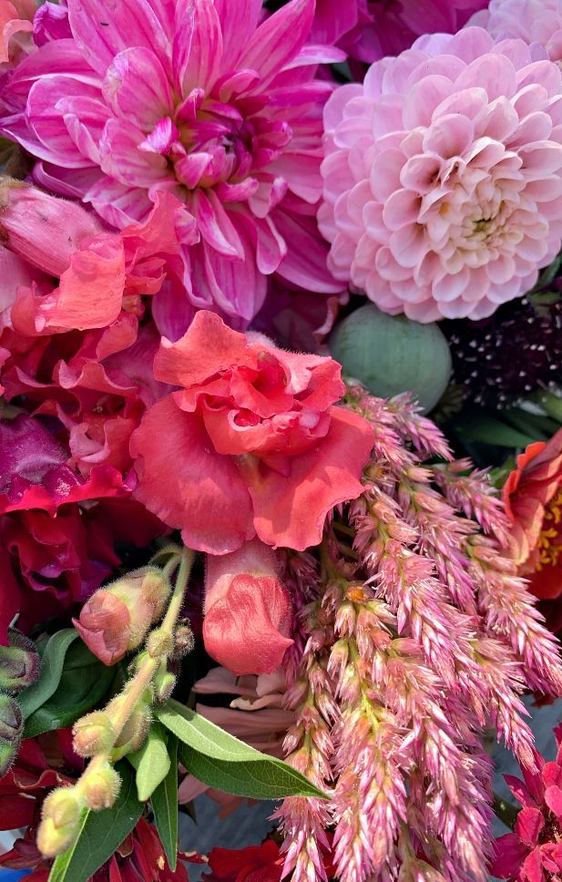 Pin On How To Start A Garden For Beginners Flowers