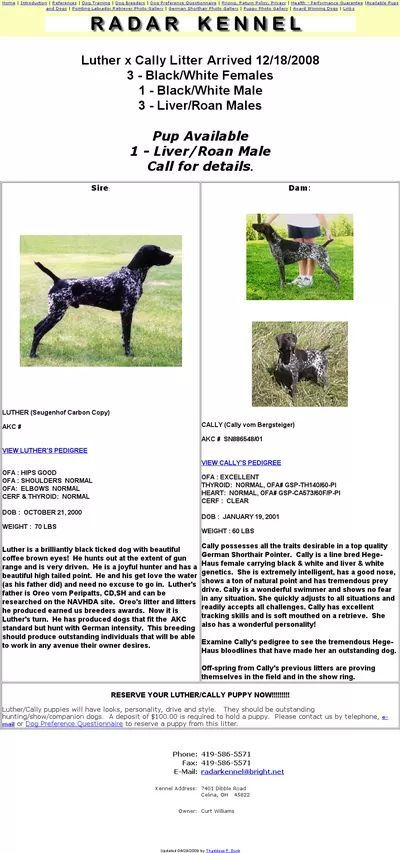 Why hate on the Black GSP? • General Chat : Gun Dog Forum ...  |Black Ticked German Shorthaired Pointer Puppies
