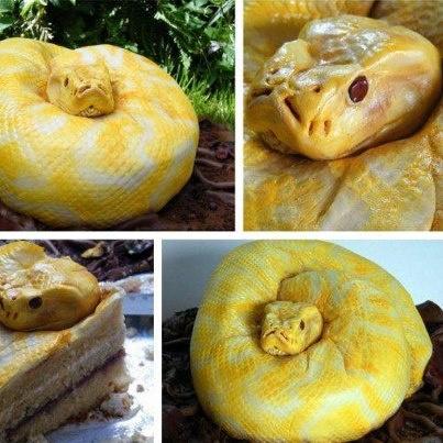 Snake cake !