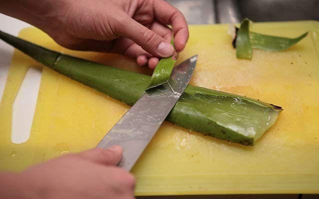 Aloe Vera Jeli Nasıl Yapılır? Aloe vera içeren ürünlere hemen her kozmetik mağazasında ve hatta eczanelerde rastlayabilirsiniz. Cildi nemlendiren, tahrişi önleyen, yaraları iyileştiren ve kırışıklıkları önleyen aloe vera özü, egzamadan tutun da cilt kuruluğuna dek pek çok cilt sorununa karşı önerilir.Bir bitkinin bu şekilde sıralanan yararlarından en verimli şekilde faydalanmanın yolu da olabildiğince saf ve …