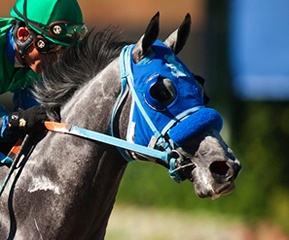 Kentucky Derby - May 5th   then the Preakness and Belmont - the rest of the Triple Crown.