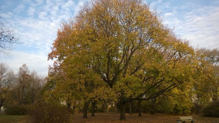 Park Praski - jesień