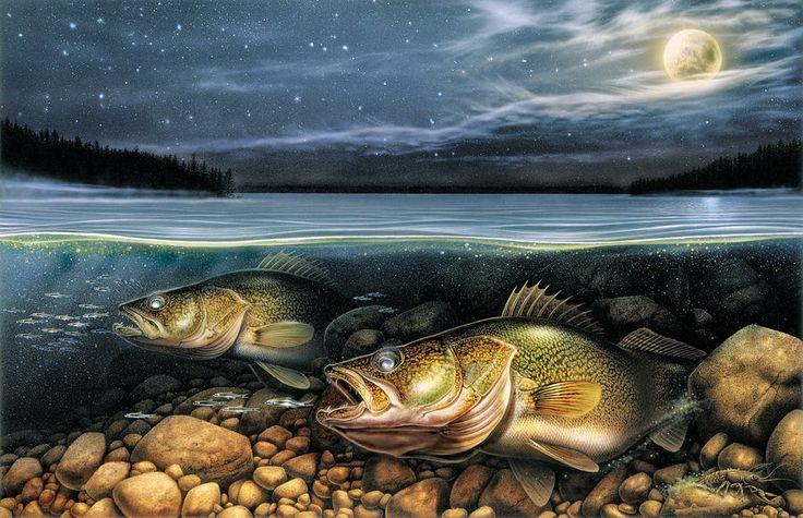 Harvest Moon Walleye John Q Wright Gone Fishing
