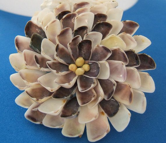 3 Colorful Coquina Seashell Flower by CraftyShells on Etsy, $18.50