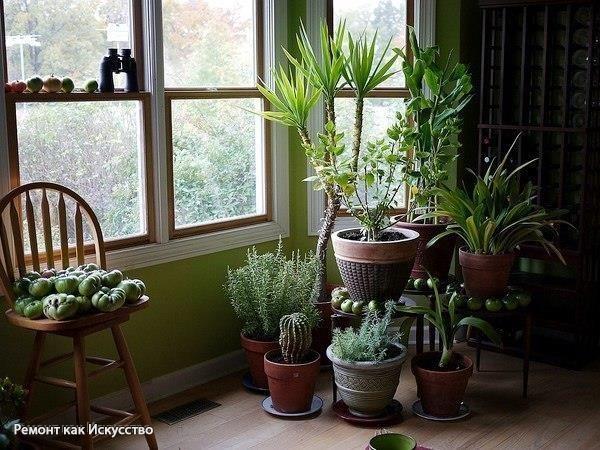 """Чем подкармливать комнатные растения?  Секрет роскошного комнатного цветника прост: растения нужно хорошо подкармливать, иначе не дождаться ни пышной листвы, ни хорошего цветения. Жесткая """"диета"""", когда растение длительное время испытывает нехватку питательных веществ, обычно приводит к заболеванию – ведь сил для сопротивления у растения нет. Но как правильно составить меню для зеленых питомцев, учитывая их разные вкусы?  1). Практически все растения любят сахар (а кактусы вообще великие…"""