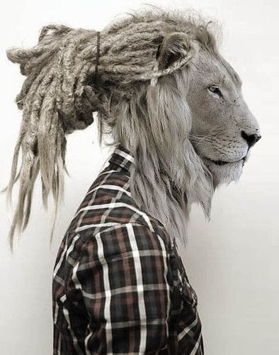 This image catches my eye as it brings out the background of the people/religion the Rastafarian live up to as they have used a lions head to bring out the inner power and strength as well as it being the main symbol to Rastafarian's where as the dreadlocks represent the mane.